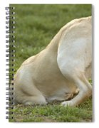 Labrador In Hole Spiral Notebook