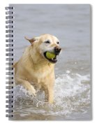 Labrador-mix Retrieving Ball Spiral Notebook