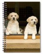Labrador Puppies At Window Spiral Notebook