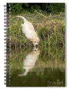 Labrador Puppy Drinking Spiral Notebook