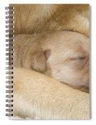 Labrador Puppy On Mother Spiral Notebook
