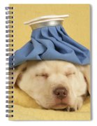 Labrador Puppy With Ice Pack Spiral Notebook