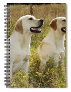 Labrador Retriever Dogs Spiral Notebook