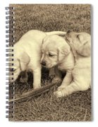 Labrador Retriever Puppies And Feather Vintage Spiral Notebook
