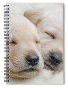 Labrador Retriever Puppies Sleeping  Spiral Notebook