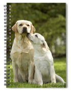 Labradors, Adult And Young Spiral Notebook