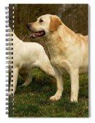 Labradors Spiral Notebook