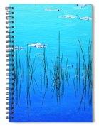 Lacassine Pool Reeds Spiral Notebook