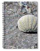 Lacy Shell On A Beachrock Spiral Notebook