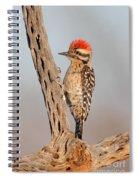 Ladder-backed Woodpecker Spiral Notebook