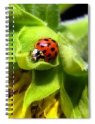 Ladybug And Sunflower Spiral Notebook