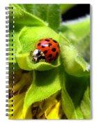 Ladybug And Sunflower Spiral Notebook