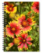 Lady Bird And Her Flowers Spiral Notebook