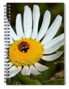 Lady Bug Bulls Eye  Spiral Notebook