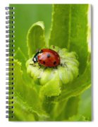 Lady Bug In The Garden Spiral Notebook