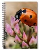 Lady Bug On Clover Spiral Notebook