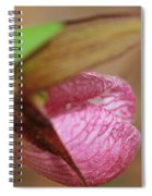 Lady Slipper At Moore State Park Close Up 1 Spiral Notebook