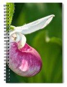 Lady Slipper Illuminated Spiral Notebook