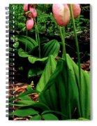 Lady Slipper Spiral Notebook