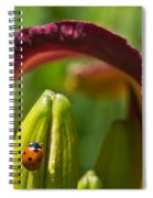 Ladybird Beetle Cuddled By Lily Blossom 4 Spiral Notebook