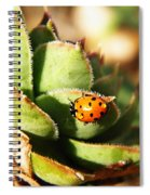 Ladybug And Chick Spiral Notebook