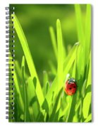 Ladybug In Grass Spiral Notebook