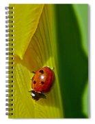 Ladybug Macro Spiral Notebook
