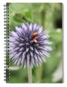 Ladybugs  Spiral Notebook