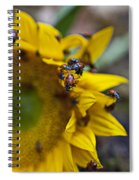 Ladybugs Close Up Spiral Notebook