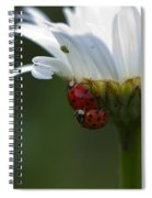 Ladybugs On Shasta Daisy Spiral Notebook