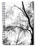 Lake - Tree  -  At The Lake By A Tree Spiral Notebook