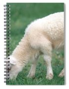 Lamb Spiral Notebook