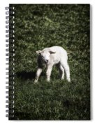 Lamb Spiral Notebook