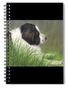 Landseer Newfoundland Dog In Grass Pets Animal Art Spiral Notebook