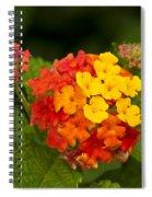 Lantana Spiral Notebook