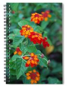 Lantana Delight Spiral Notebook