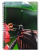 Laparus Doris Butterfly Spiral Notebook