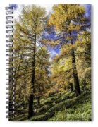 Larch Pines Spiral Notebook