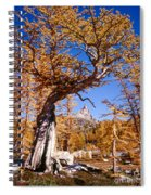 Larch Tree Frames Prusik Peak Spiral Notebook