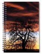 Large Cottonwood At Sunset Spiral Notebook