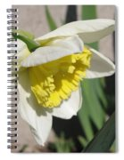 Large-cupped Daffodil Named Ice Follies Spiral Notebook
