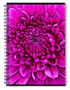 Large Pink Dahlia Retro Style Spiral Notebook