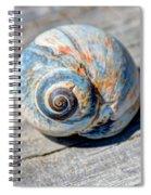 Large Snail Shell Spiral Notebook