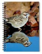Lark Sparrow Chondestes Grammacus Spiral Notebook