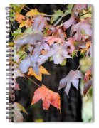 Late Autumn Maples Spiral Notebook