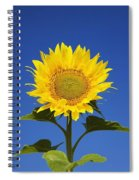 Laval, Quebec, Canada Sunflower Spiral Notebook