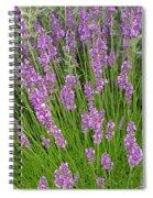 Lavendar Spiral Notebook