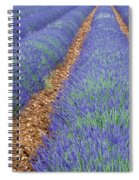 Lavendel 2 Spiral Notebook