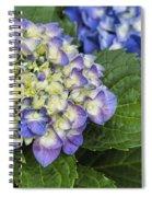 Lavender Blue Hydrangea Blossoms Spiral Notebook