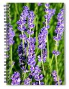 Lavender Dream Spiral Notebook